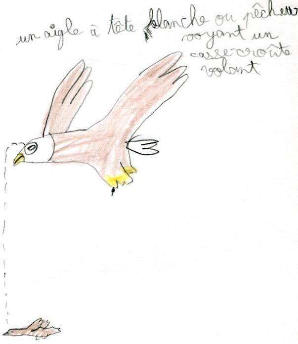 dessin aigle pêcheur